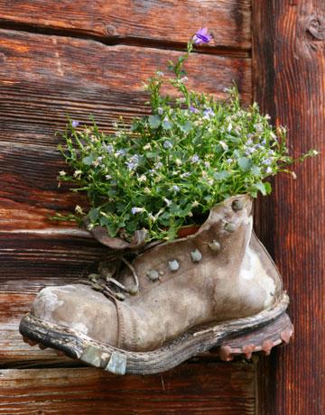 Crocs Schuh lila bepflanzen Hingucker im Garten Balkon