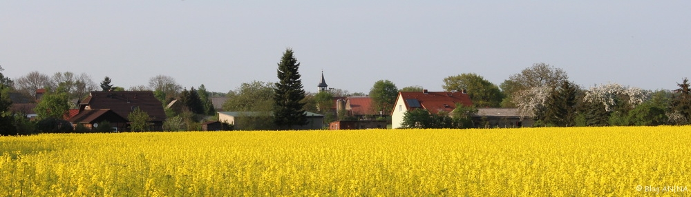 Rapsblte in der Altmark