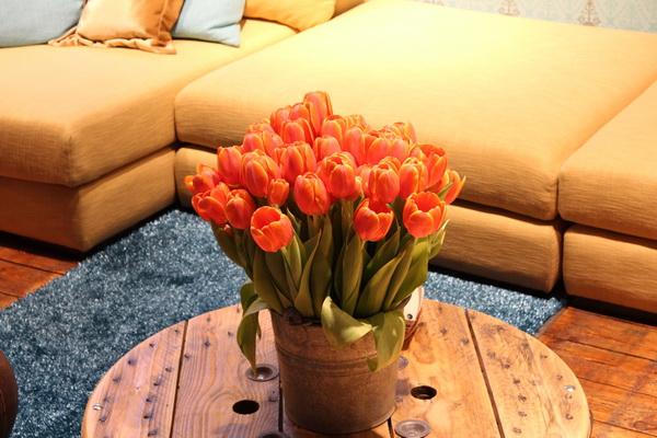 Farbenmix bei den Möbeln