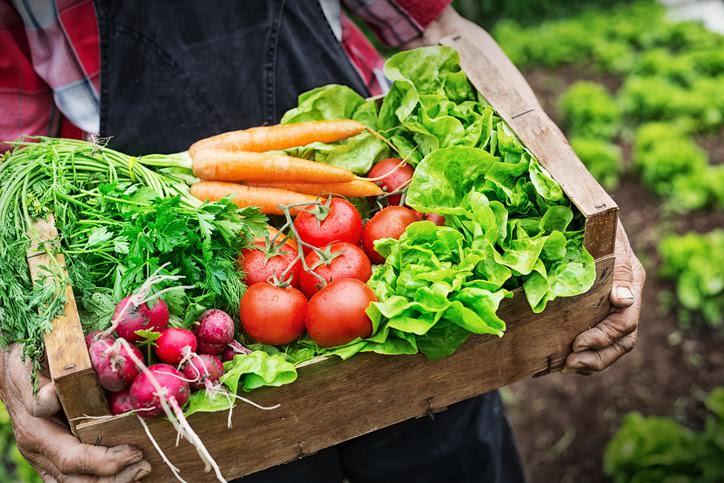 Gemüse aus dem Kleingarten