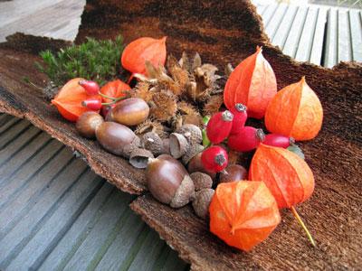 Herbstrindenteller