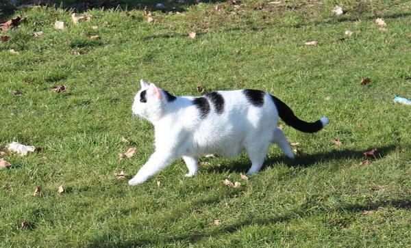 Katze auf Rasen