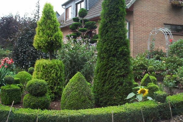 wenn man einen buchsbaum pflanzen m chte blog an na haus und gartenblog. Black Bedroom Furniture Sets. Home Design Ideas