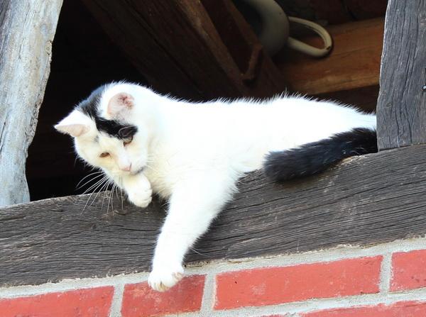 Felix im Scheunenfenster