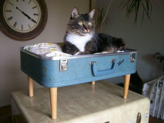 Katzenbett aus Koffer