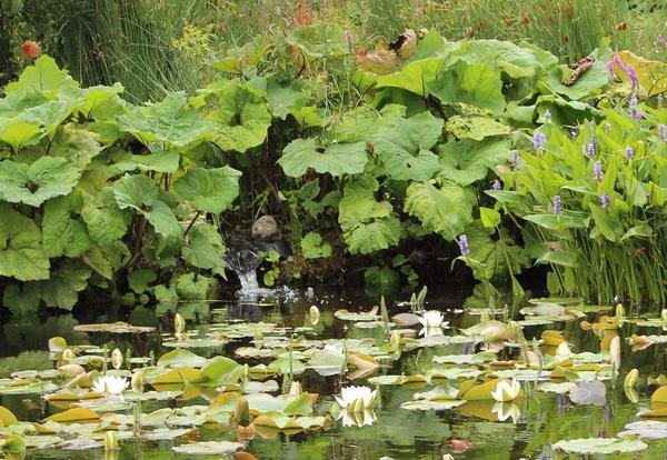 Wasserfall mit Teichpflanzen