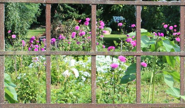 Altes Eisenfenster