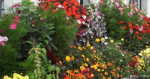 Ein buntes Blumenbeet