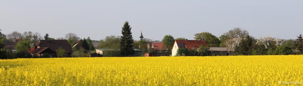 Rapsblüte in der Altmark