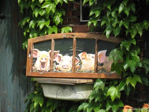 Fensterbild - Schweine
