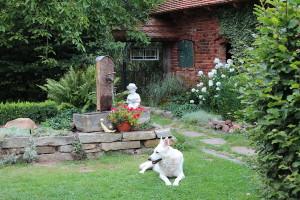 Brunnen mit Knaben und Hund