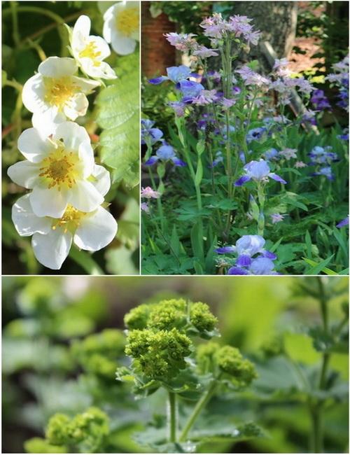 Blumen auf Hof Eichengrund2