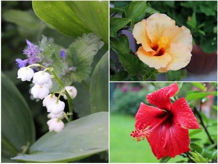 Collage 1 Blumen