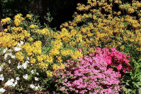 Bunte Sträucher und Blumen