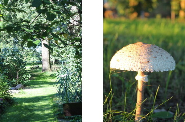 Gartenweg und Pilz