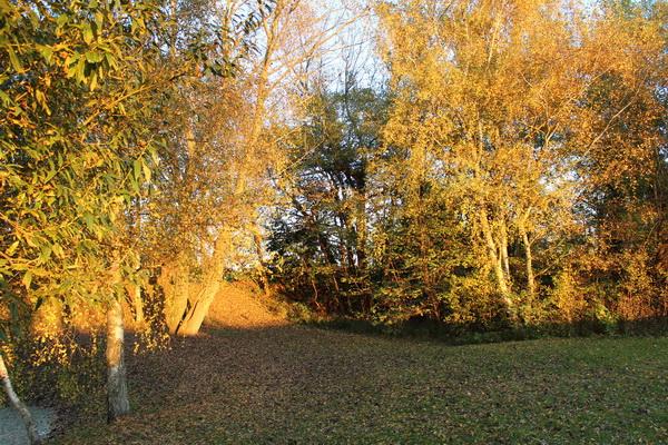 Gartenlandschaft mit Laub