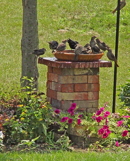 Ziegel-Vogelbad