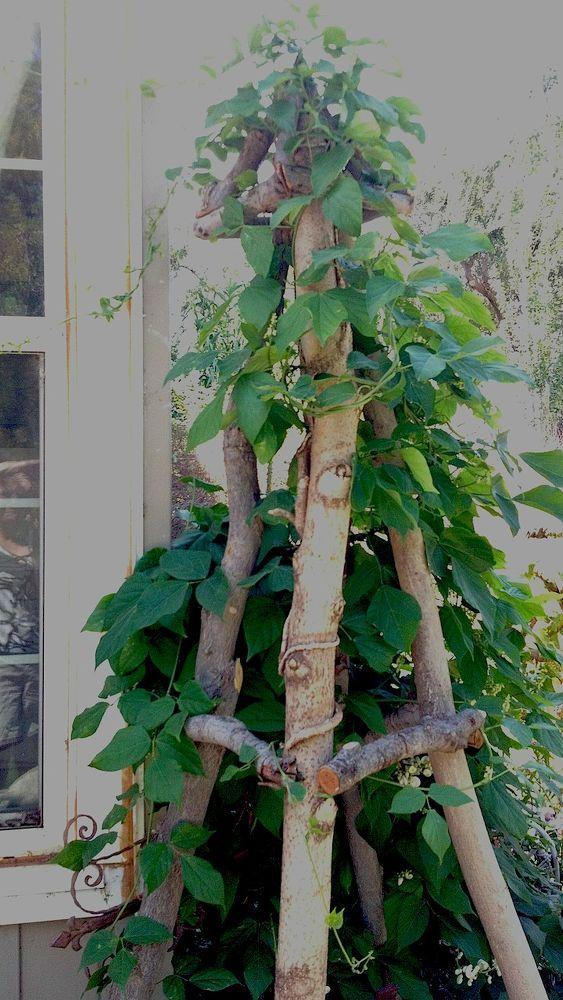 Astholz-Obelisk mit Blüten