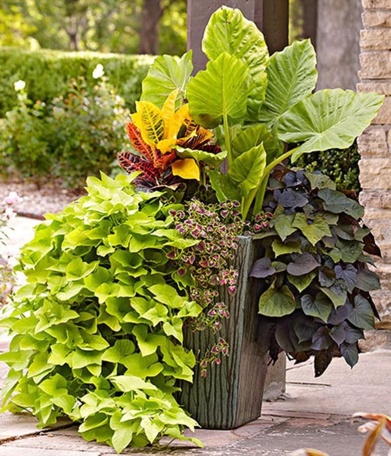 Container Pflanzen